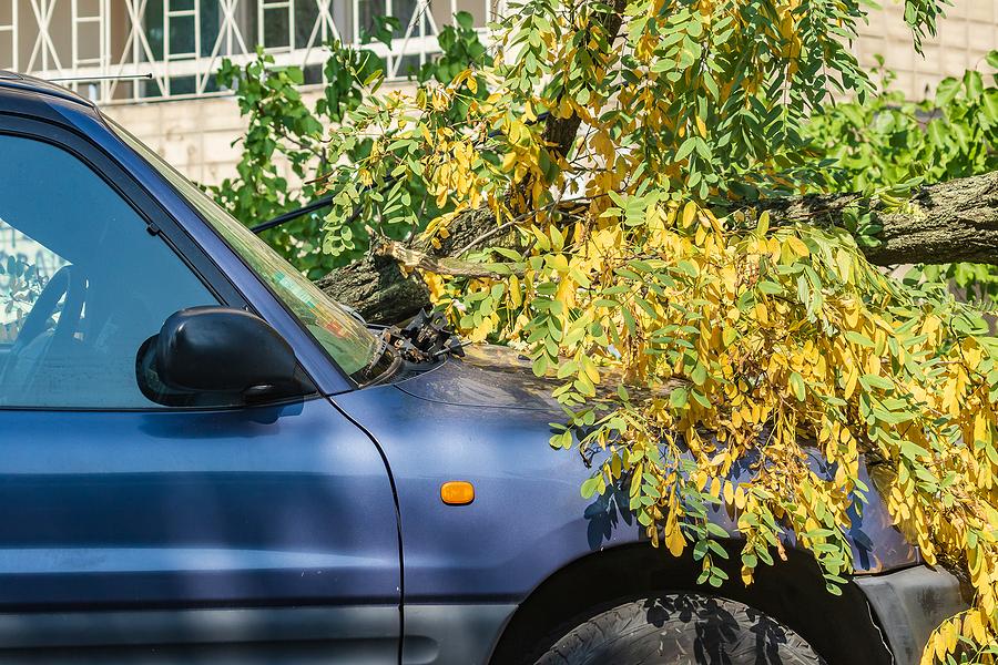 emergency tree service Cleveland