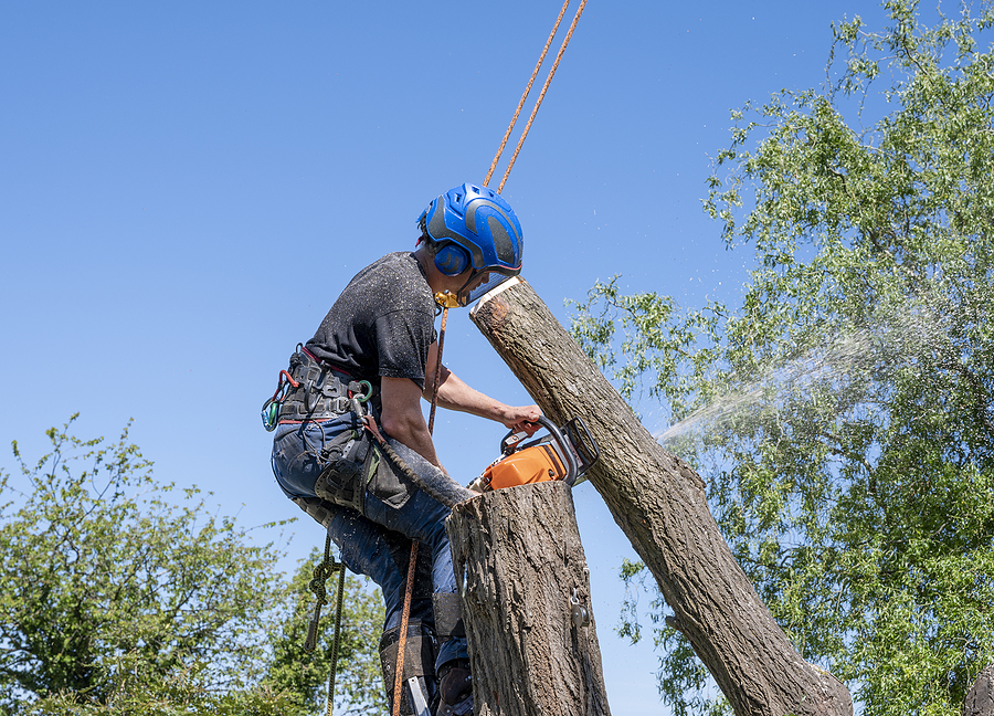 tree removal Cleveland Ohio